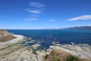 2017 New Zealand_0331