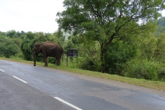 Sri-Lanka-2020_0056