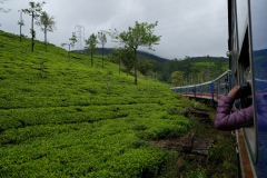Sri-Lanka-2020_0219