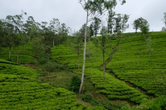 Sri-Lanka-2020_0221