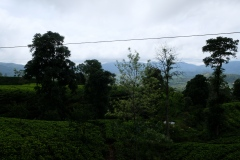 Sri-Lanka-2020_0225