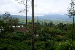 Sri-Lanka-2020_0228