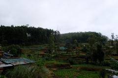 Sri-Lanka-2020_0238