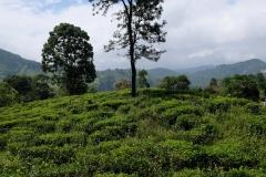 Sri-Lanka-2020_0279