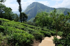 Sri-Lanka-2020_0308