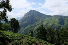 Sri-Lanka-2020_0310