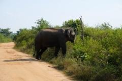 Sri-Lanka-2020_0356