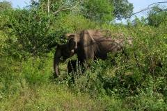 Sri-Lanka-2020_0359