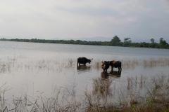 Sri-Lanka-2020_0369
