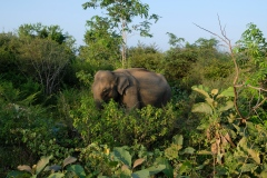 Sri-Lanka-2020_0378