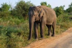 Sri-Lanka-2020_0381