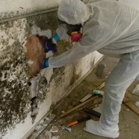 licensed mold remediation company lake orion, mi