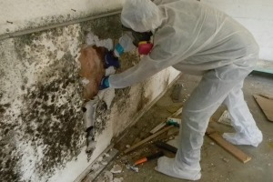 Home Mold Remediation