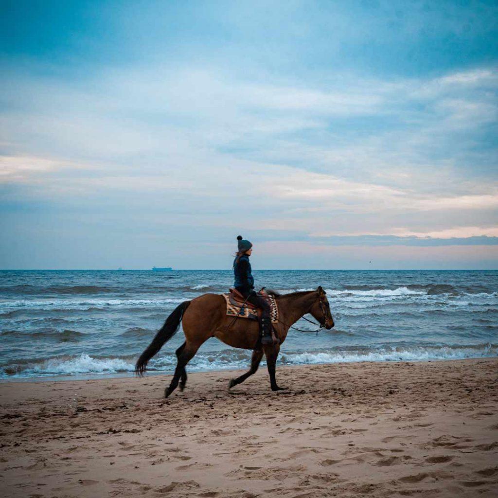 michal dziengo horse caught on the beach
