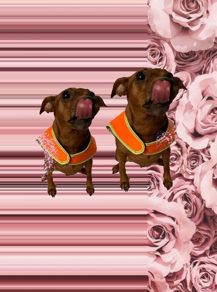 dog brand tailor by paulina skibicka