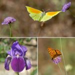 The Lot, a paradise for butterflies