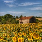 Welcome to the land of vineyards and sunflower fields