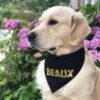 gepersonaliseerde bandana hond, hondenbandana met naam, honden bandana, bandana hond bedrukken