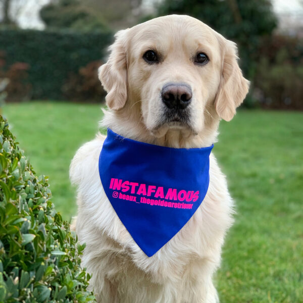 instafamous hondenbandana, instagram bandana, bandana hond