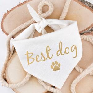 bandana, hond, best dog