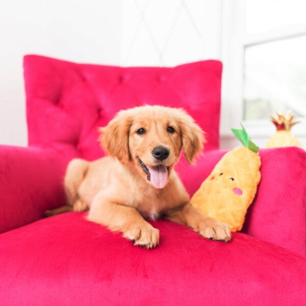 hondenspeelgoed, speeltje hond, leuk, grappig, zippypaws, ananas