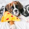 pizza, hond, speelgoed, knuffel, hondenspeeltje, speelgoed hond