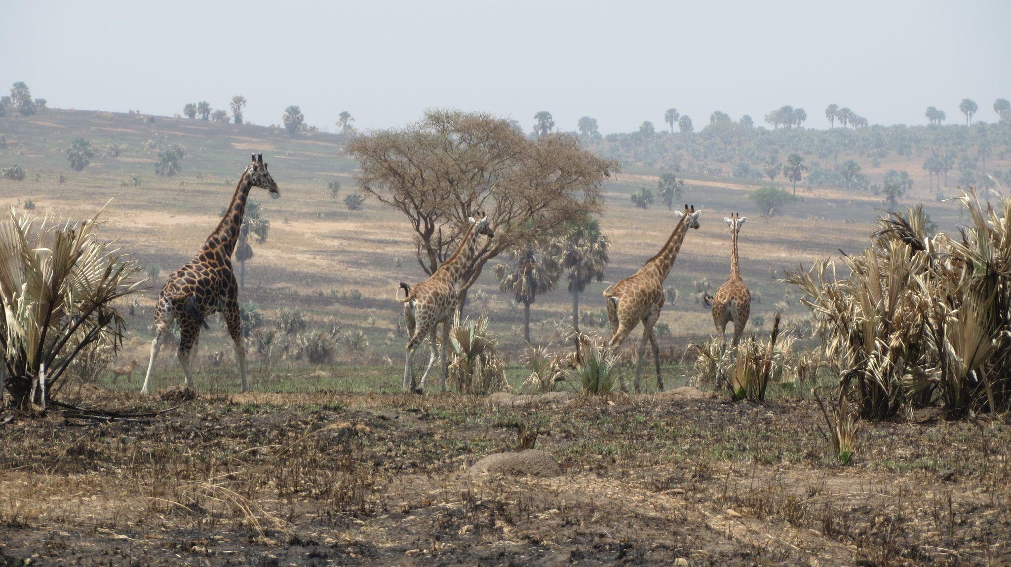 Dwars door Oeganda 2021
