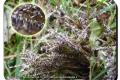 Koekelare - Arboretum 04-10-2017 Witpootglinsterkopje 3