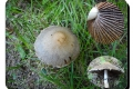 Zillebeke-Hogebos-05-10-2016-Tranende-franjehoed