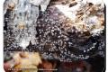 De-Palingbeek-05-12-2018-Knikkend-kalkkopje