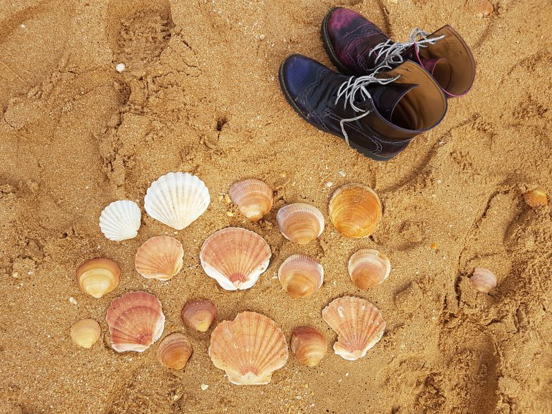 my shoes abroad seashells
