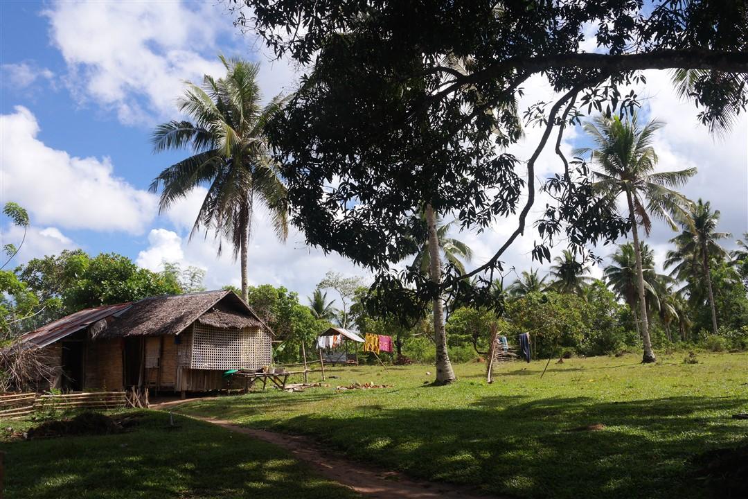 guimaras plantation