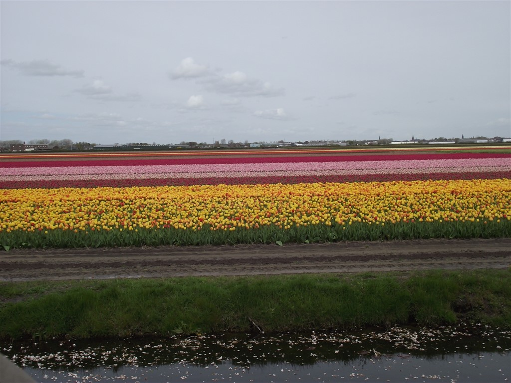 tulips boat ride