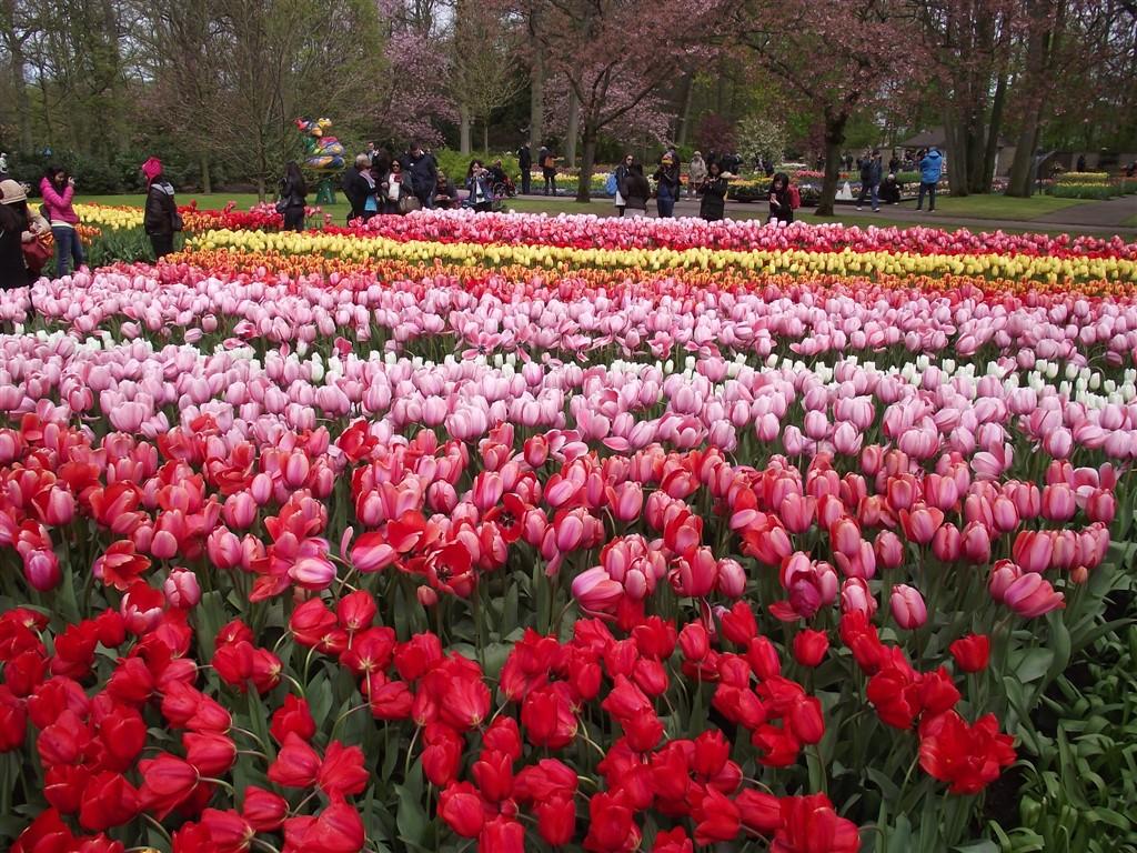 tulip patterns Holland