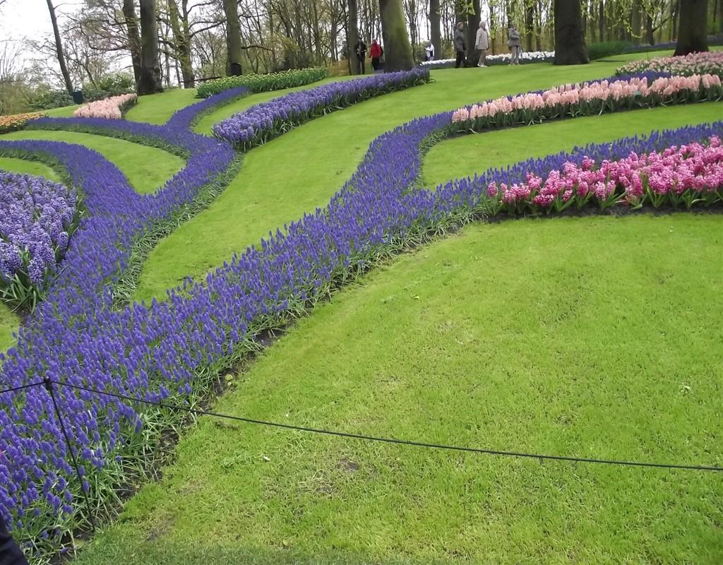 keukenhof tulip fields patterns