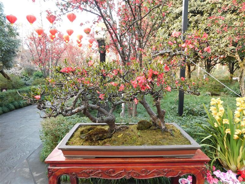 why to visit Chengdu