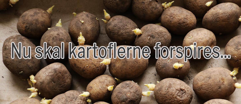 Picture of: Dyrkning Af Kartofler Velkommen Til Nabkaer 1