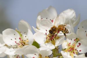 Die Bedeutung von Bienen