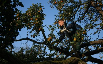AUSGEBUCHT – Ausbildung zum Obstbaumwart