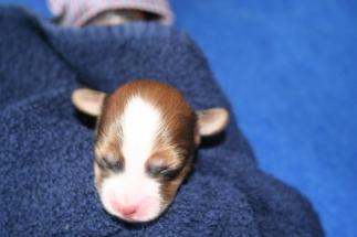 Pup 2 dag 3