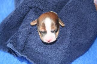 Pup 6 dag 3