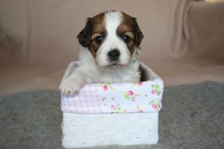 Pup 1 dag 28