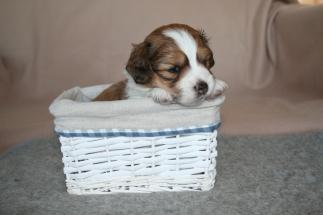 Pup 2 dag 28