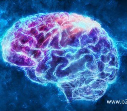 content marketing tactieken brains