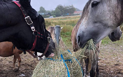 Natural Equine Care