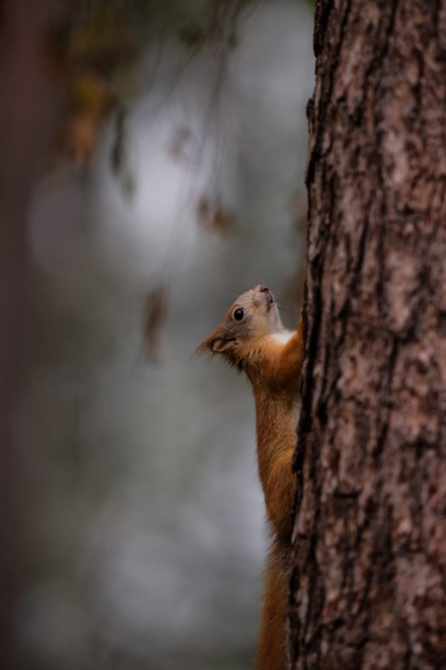 Squirrel by Natural High