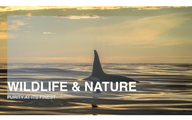 Orca Wildlife and Nature Natural High