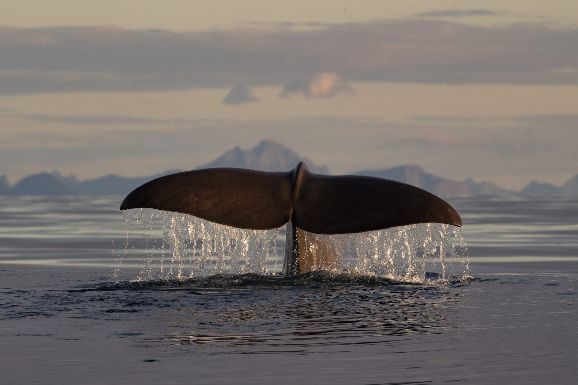 Humpback Whale tail Natural High green sustainability nature and wildlife tours travel packs