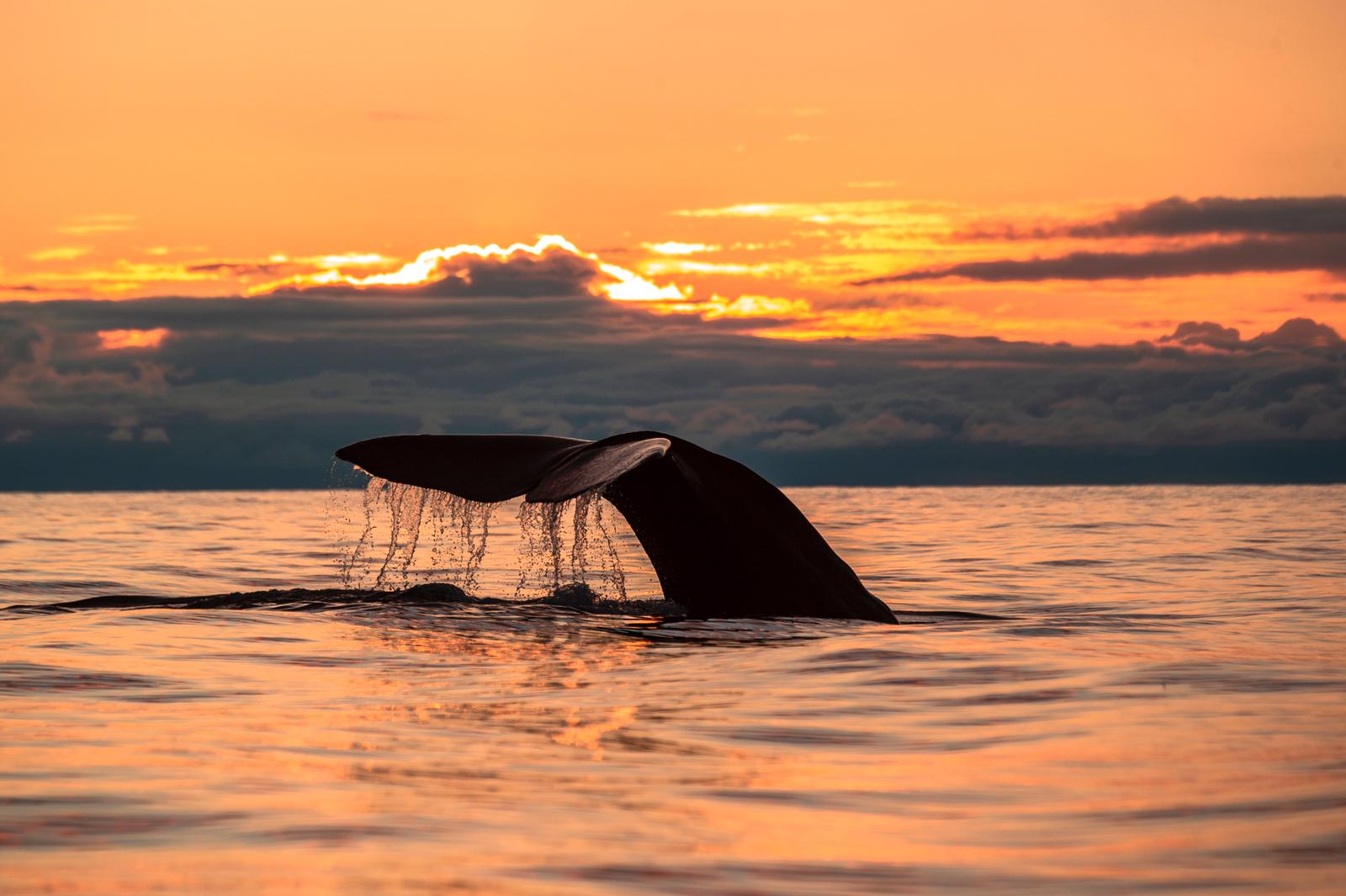 Whale tail by Natural High Norway