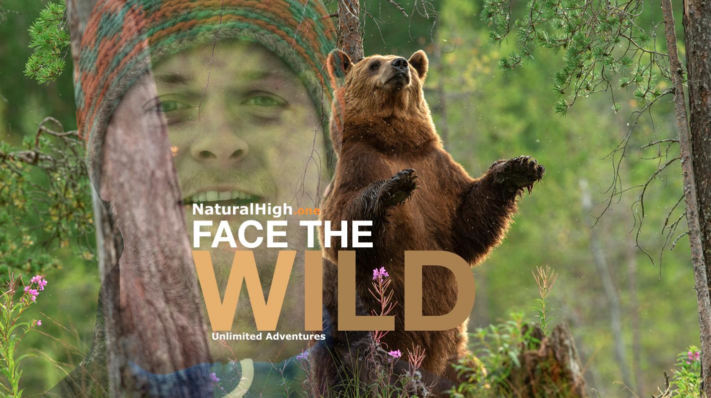 Brown Bear; wilderness; wildlife